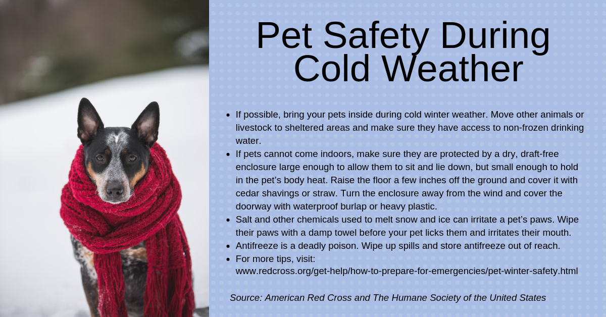 Pet Safety Tips for Winter