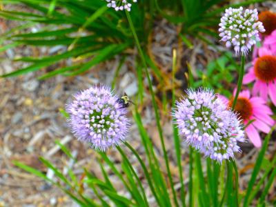 The Water Street MIni Park pollinators
